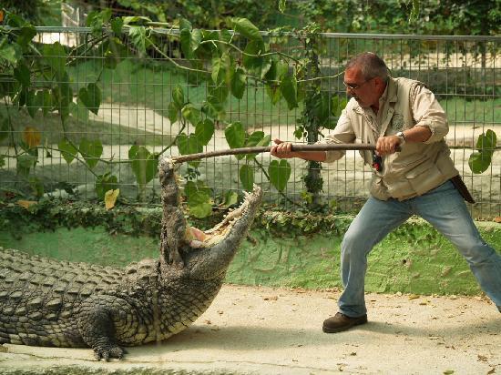 Crocodiles Park Costa del Sol