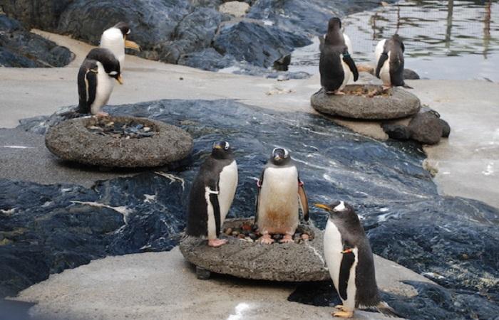 Aquarium in Bergen