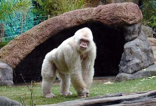Barcelona Zoo in Barcelona