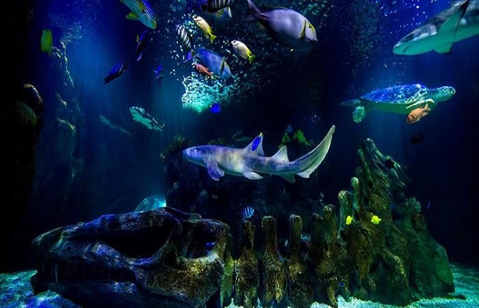 Sea Life Center Benalmadena