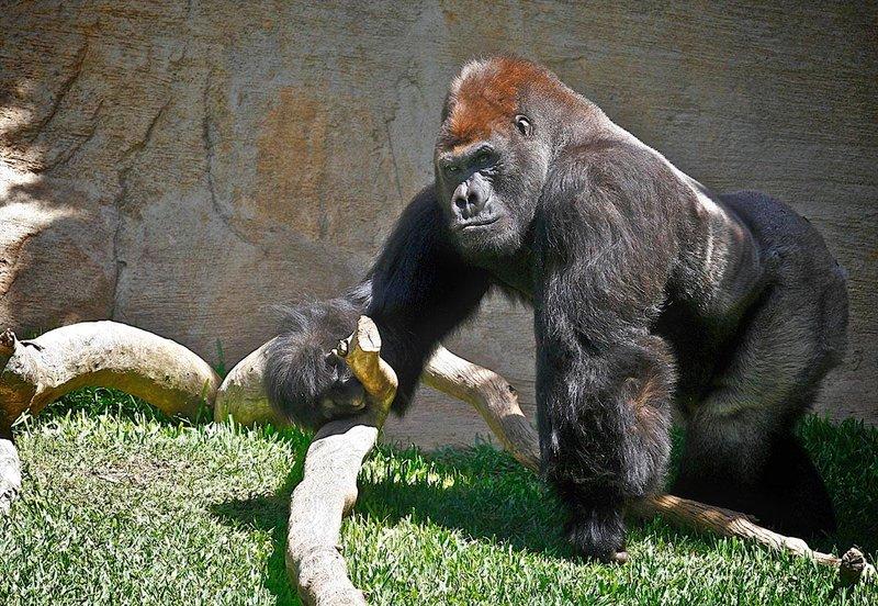 Zoo Fuengirola