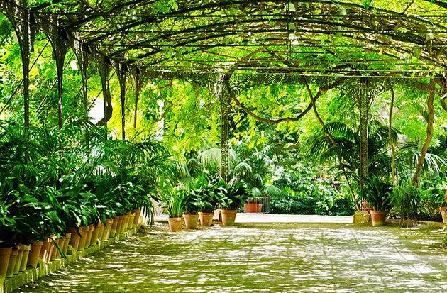 Conception Botanical Garden Malaga