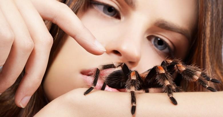 Spiders in Spain