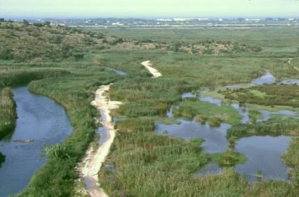 Marjal de Pego Oliva Nature park Costa Blanca