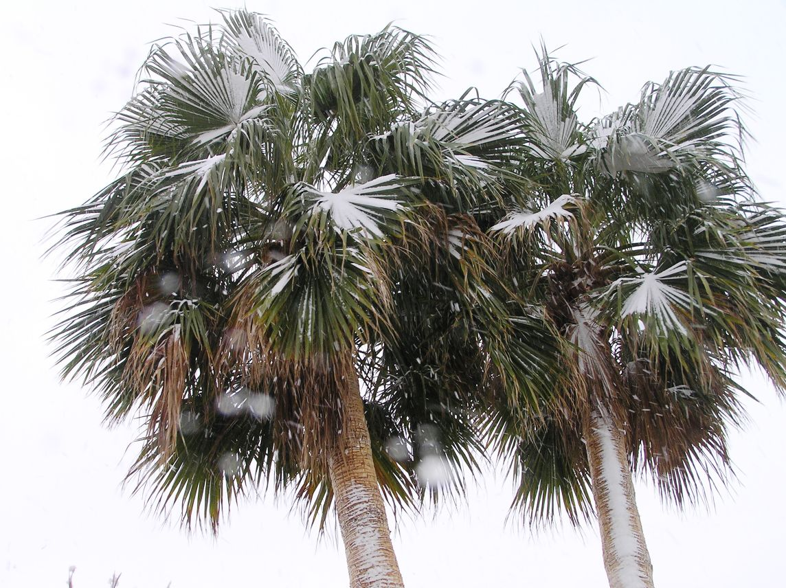 Valencia climate