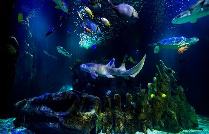 Sea Life Center Benalmadena